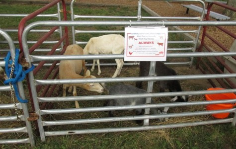 Last week, Mr. Webreck and his FFA students set up a petting zoo at Myers Elementary for the third year.