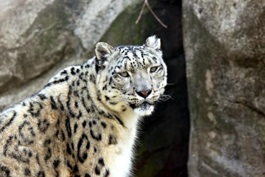 Pretty soon the only way youll get to see this leopard is through a picture.