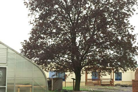 Hug a tree. It's  Arbor Day