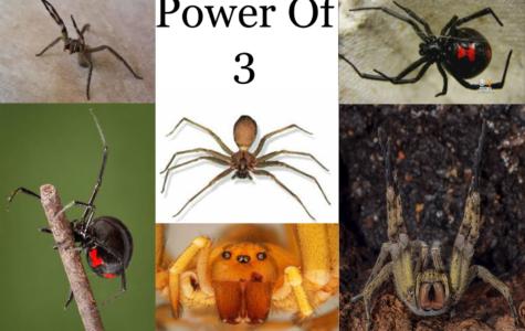 3 Deadliest Spiders