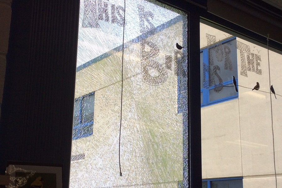 An errant bird did a number on the library's bird-watching window.