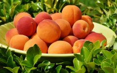 HOLIDAY-ISH: National Apricot Day